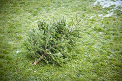 使用的圣诞树 免版税库存照片
