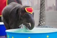 使用的大象在水中 库存图片