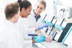 使用科学技术的小组研究员为样品测试  免版税库存图片