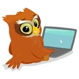 使用膝上型计算机的猫头鹰 免版税库存照片