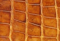 使用被佩带的鳄鱼皮肤 库存图片