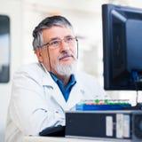使用计算机的高级研究员在实验室里 库存图片