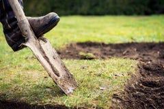 使用锹的人为开掘老的草坪,从事园艺的概念 免版税库存图片