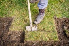 使用锹的人为开掘老的草坪,从事园艺的概念 免版税库存照片