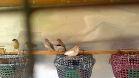 使用鸟的婴孩和享用 库存图片