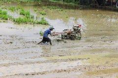 使用翻土机拖拉机的亚洲农夫在米领域 库存照片