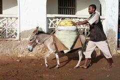 使用驴的本机为运输在拉穆,肯尼亚 免版税库存照片