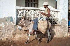 使用驴的本机为运输在拉穆,肯尼亚 库存图片