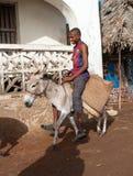 使用驴的本机为运输在拉穆,肯尼亚 库存照片