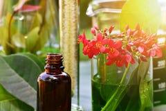 使研究、自然有机植物学和科学玻璃器皿,供选择的绿色草本医学,自然护肤美容品服麻醉剂 库存图片