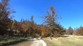 使秋天五颜六色的森林风环境美化看法吹通过叶子的 导致森林的未铺砌的地方路 股票视频