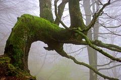使结构树模糊 库存照片