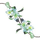 使者喇叭花的绘画油白色颜色 免版税图库摄影