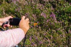 使蝴蝶的foto图片在开花的五颜六色他的妇女 库存照片