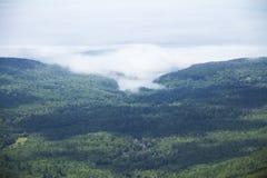 使辗压模糊入阿科底亚国家公园,缅因 免版税图库摄影