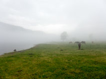 使领域环境美化全景视图在山的在雾 免版税图库摄影