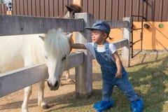 使马变矮小的亚洲逗人喜爱的女婴手接触 图库摄影