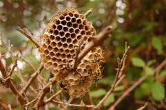 使黄蜂套入 图库摄影