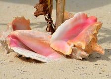 使贝壳靠岸 库存图片