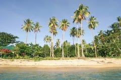 使从海的棕榈靠岸在El Nido巴拉望岛 库存照片