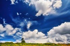 使绿色新鲜的草环境美化的树和领域在蓝天下 免版税库存图片