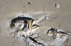使biohazard停止的装饰的鱼图象被挂接的符号靠岸 库存图片