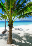 使coron绿色海岛malcapuya菲律宾沙子结构树白色靠岸 免版税图库摄影
