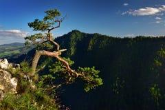 使Sokolica峰顶环境美化看法在Pieniny山的 库存图片