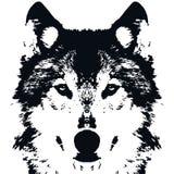 例证传染媒介黑色狼 免版税库存图片