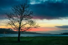 例证偏僻的日落结构树向量 爱尔兰 库存照片