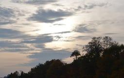 例证偏僻的日落结构树向量 免版税库存图片