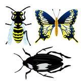 例证昆虫 免版税库存照片