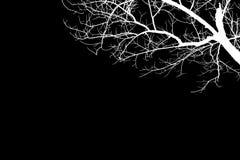 例证白色光秃的树剪影 免版税库存图片