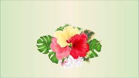 例证花束的录影无缝的圈动画与热带花植物布置的,与红色桃红色和黄色hibiscu 股票录像