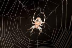 例证蜘蛛向量万维网 库存图片