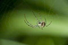 例证蜘蛛向量万维网 免版税库存照片
