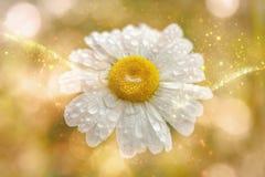 例证-延命菊-水投下- bokeh -光线-黄色金子 免版税库存图片