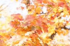 例证-秋叶,在树梢的叶子 图库摄影