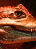 侏罗纪公园 库存图片