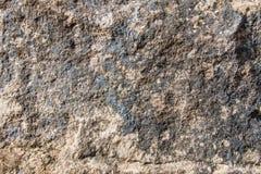 侏罗纪灰岩背景 免版税库存图片