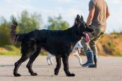 供以人员与一条黑杂种狗和一只白德国牧羊犬的戏剧 免版税库存照片