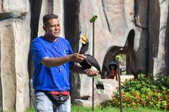 供以人员与做把戏的鸟教练员toucan在鸟` s展示vi 免版税库存图片