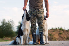 供以人员与博德牧羊犬和一只白德国牧羊犬的戏剧 图库摄影