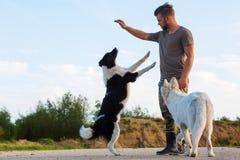 供以人员与博德牧羊犬和一只白德国牧羊犬的戏剧 免版税图库摄影