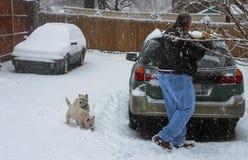 供以人员从汽车的刮的冰有看在大雪的两条Westie狗的 免版税库存图片