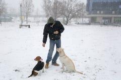 供以人员使用与他的两条狗在多雪的天 库存照片
