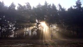 供以人员单独步行在有秋天季节的一个有雾的森林 股票录像