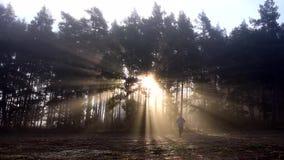 供以人员单独步行在有秋天季节的一个有雾的森林 股票视频
