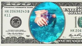供以人员在100美金框架的下潜水中  股票视频