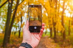 供以人员拍黄色树的照片在秋天,与电话 免版税库存照片